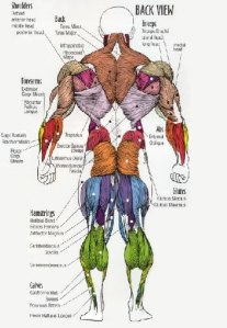 One type of anatomy