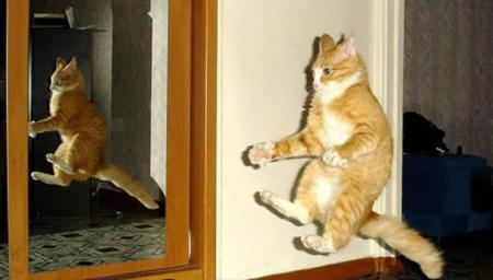 A cat demonstrating what it might be like to ride an invisible bicycle.